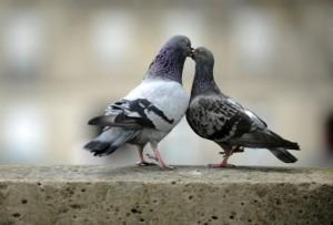 04b-international-kissing-day